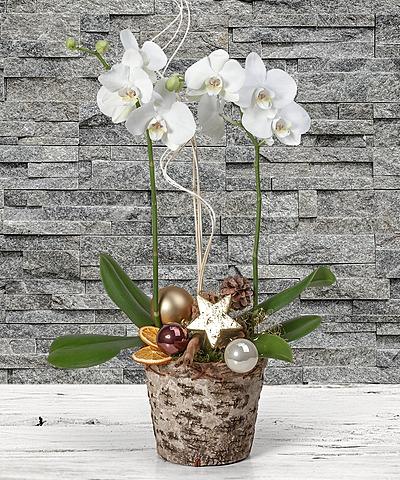 weihnachten pflanzen und mehr vom blumen und geschenkeversand valentins valentins. Black Bedroom Furniture Sets. Home Design Ideas