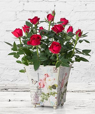 valentins blumenversand mit einem klick freude schenken. Black Bedroom Furniture Sets. Home Design Ideas