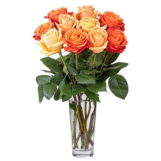 10 Premium Ecuador Rosen in Apricot Orange und CHRIST Geschenkgutschein 20 EUR