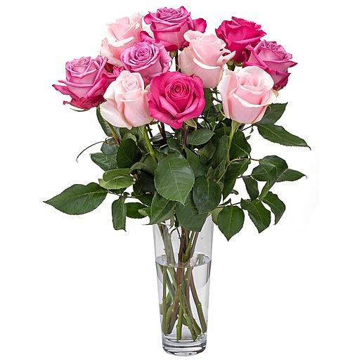 10 Premium Ecuador Rosen in Rosa Pink