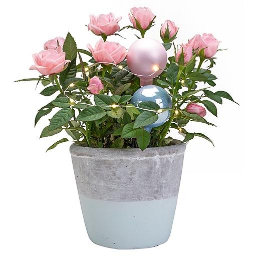 Rosa Rose im Topf mit Lichterkette