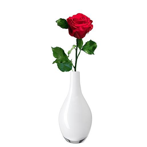 1 haltbare Rose rot und Rosen-Duftkerze