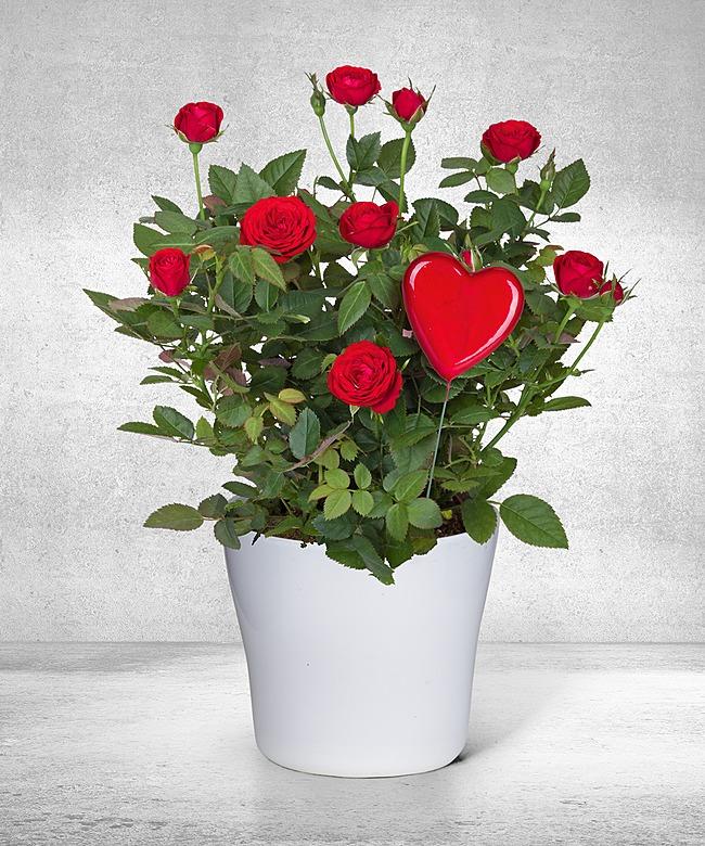 blumen und personalisierte geschenke von valentins rachael edwards. Black Bedroom Furniture Sets. Home Design Ideas