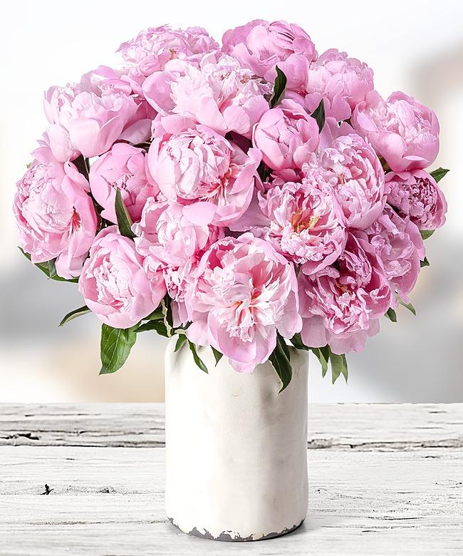 18 pfingstrosen rosa jetzt bestellen bei valentins valentins blumenversand blumen und. Black Bedroom Furniture Sets. Home Design Ideas