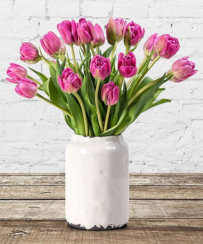 rose tulpen rose eier
