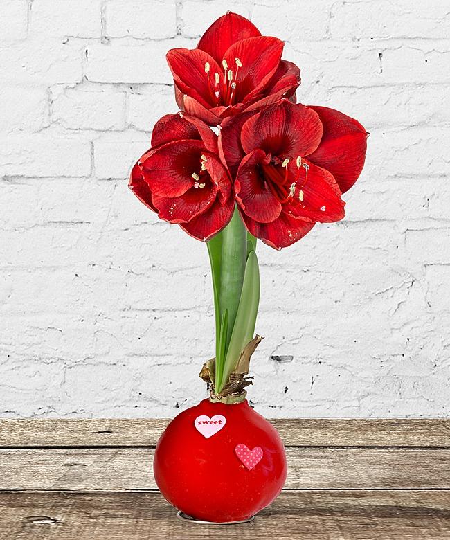 wax amaryllis rot und aromalampe mit rosenduft jetzt bestellen bei valentins valentins. Black Bedroom Furniture Sets. Home Design Ideas