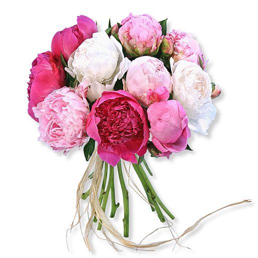 https://www.valentins.de/onlineshop/images/products/515/14206.jpg