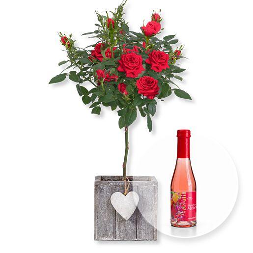 Rotes Rosenstämmchen im Herztopf und Piccolo Alles Liebe zum Muttertag