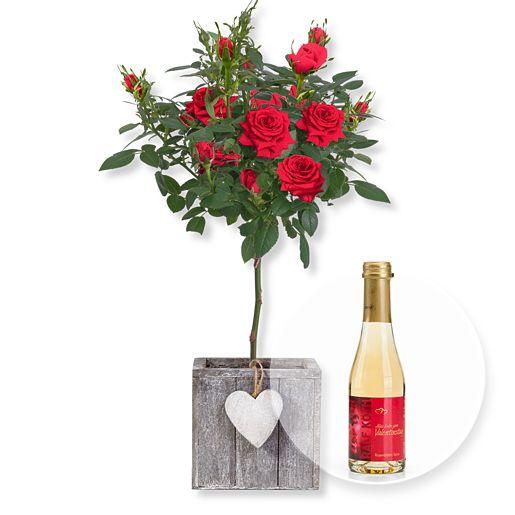 Rotes Rosenstämmchen im Herztopf und Rosenblüten-Secco Alles Liebe zum Valentinstag