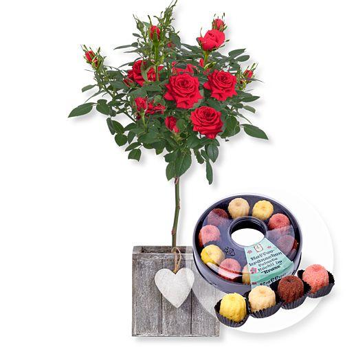 Rotes Rosenstämmchen im Herztopf und Kaffeekränzchen