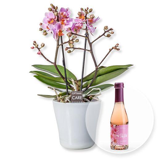 Rosa Orchidee in weißem Keramiktopf und Kirschblüten-Secco