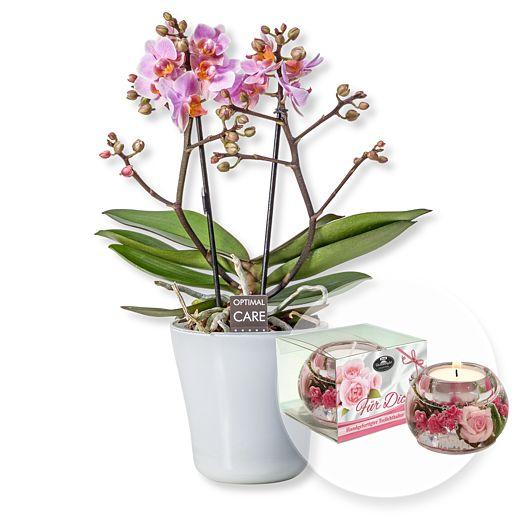 Rosa Orchidee in weißem Keramiktopf und Dreamlight Für Dich
