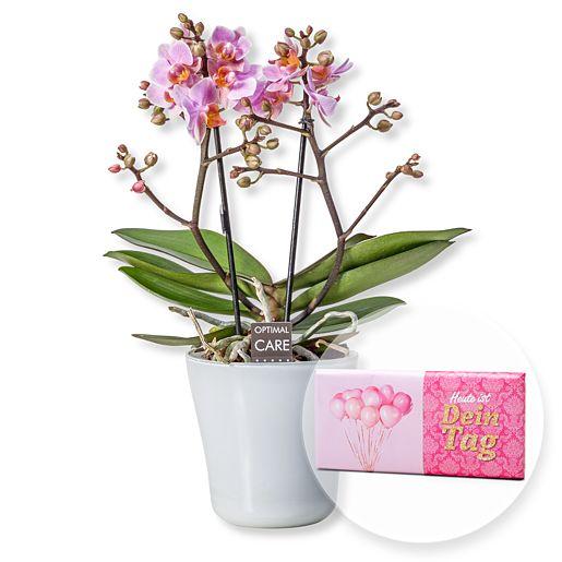 Rosa Orchidee in weißem Keramiktopf und Schokolade Dein Tag