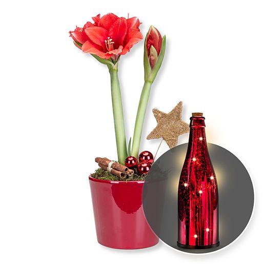 Amaryllis rot im Topf und Rote Glasflasche mit LED-Licht