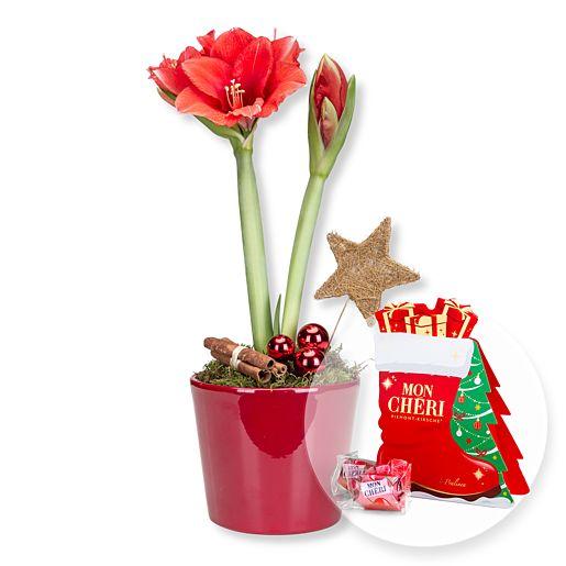Rote Amaryllis im Topf und Mon Cheri Stiefel