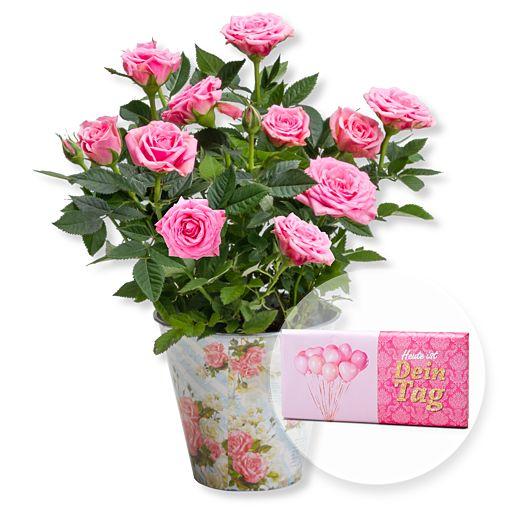 - Rosafarbene Rose im Nostalgie Topf und Schokolade Dein Tag - Onlineshop Valentins