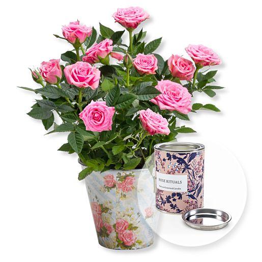 Rosafarbene Rose im romantischen Nostalgie Topf und Wachskerze Rosenduft