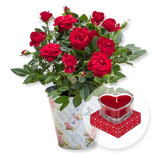 - Rote Rose im romantischen Nostalgie Topf und Herzkerze in Geschenkpackung - Onlineshop Valentins