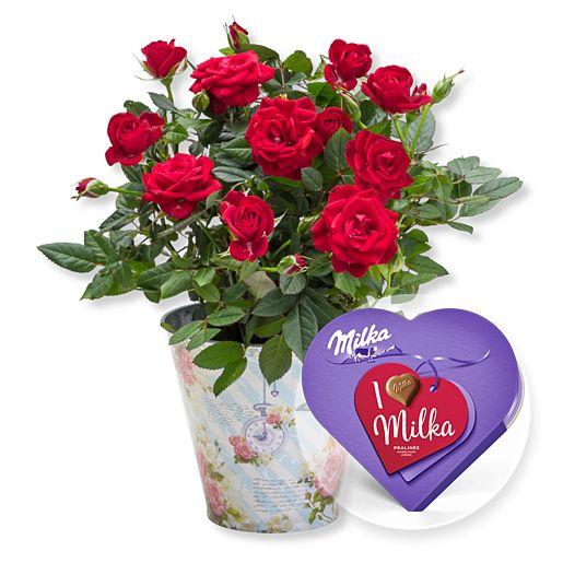 - Rote Rose im romantischen Nostalgie Topf und I love Milka Pralinés - Onlineshop Valentins