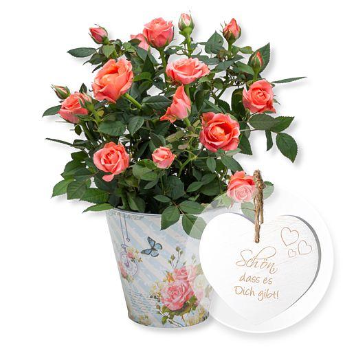 https://www.valentins.de/onlineshop/images/products/515/25165-15233.jpg