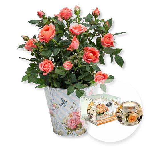 Orangefarbene Rose im romantischen Nostalgie-Topf,Dreamlight Alles Gute