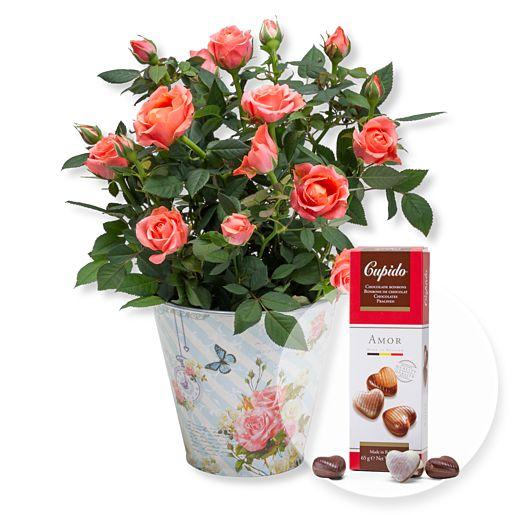 Orangefarbene Rose im romantischen Nostalgie-Topf und Pralinen-Herzen
