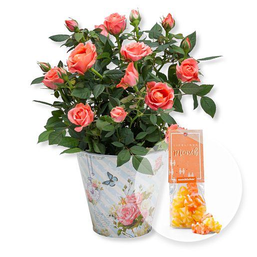 Orangefarbene Rose im romantischen Nostalgie-Topf und Fruchtgummi Lieblingsmensch