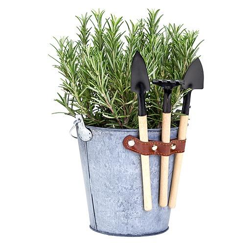 Rosmarin im Zink Eimer mit Gartenwerkzeug