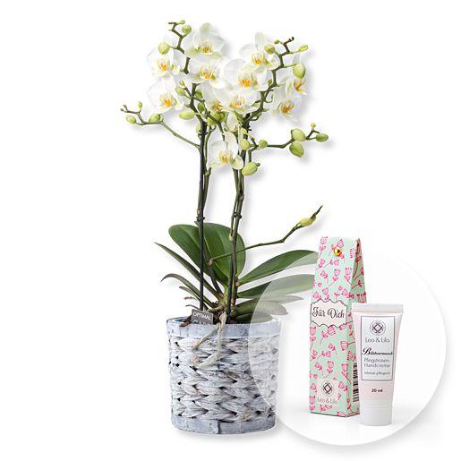 Weiße Orchidee im grauen Korbtopf und Blütenrausch Pfingstrosen-Handcreme Für Dich