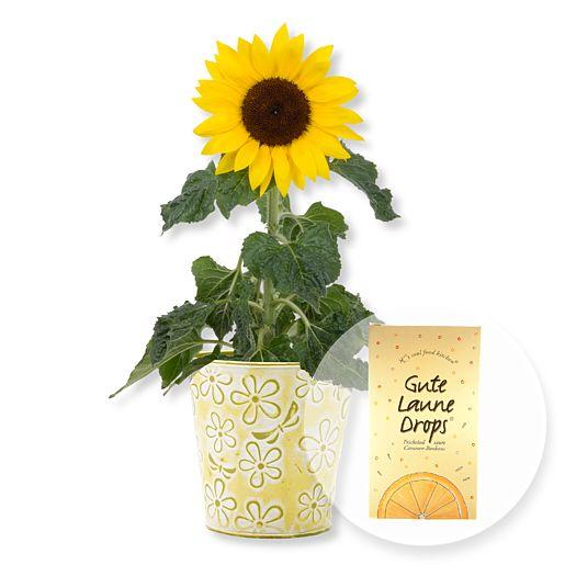 Sonnenblume im Topf und Gute Laune Drops