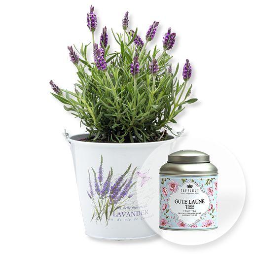 Lavendel im Zink-Eimer und Tafelgut Gute Laune Tee