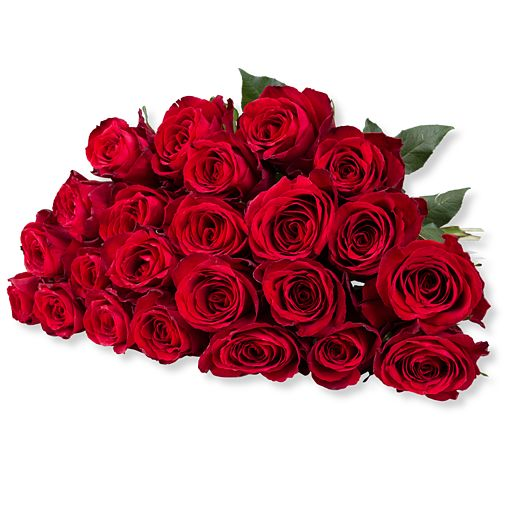 23 rote Rosen
