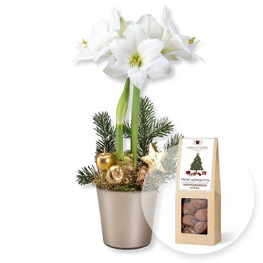 Weiße Amaryllis im Topf und Trüffelmandeln