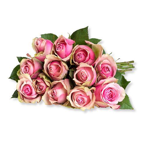 12 rosafarbene Rosen