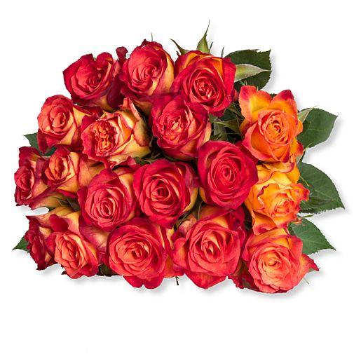 18 gelb-orangefarbene Rosen