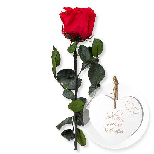 1 haltbare Rose rot und Vintage-Herz Schön, dass es Dich gibt!