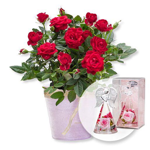 Nützlichblumen - Rote Rose im Topf und Dreamlight Rosen Engel - Onlineshop Valentins