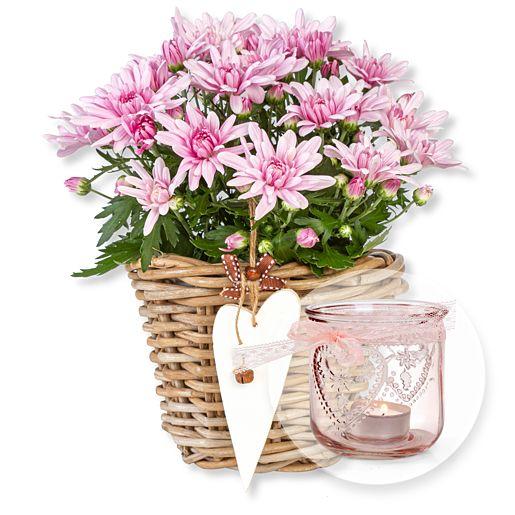 Nützlichblumen - Violette Chrysantheme im Korb und Windlicht mit Schleife - Onlineshop Valentins