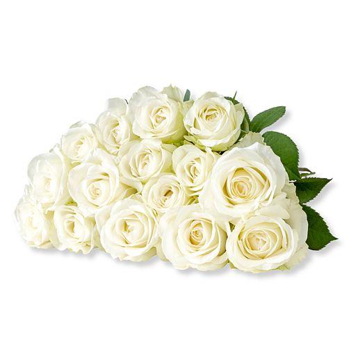 15 weiße Fairtrade-Rosen