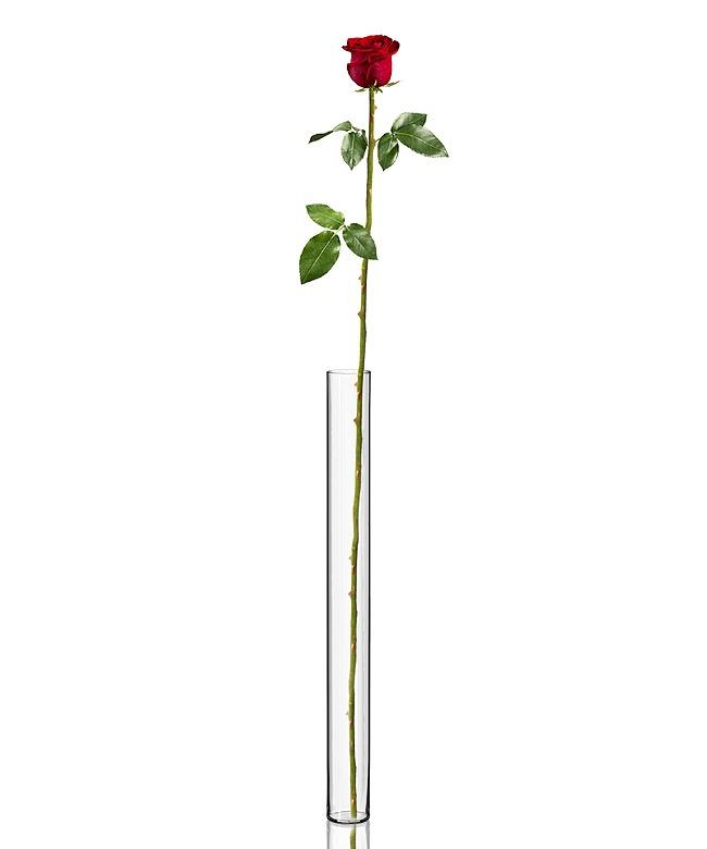 riesen rosen bestellen