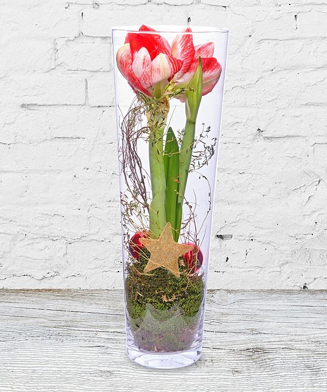 amaryllis im glas jetzt bestellen bei valentins valentins blumenversand blumen und. Black Bedroom Furniture Sets. Home Design Ideas