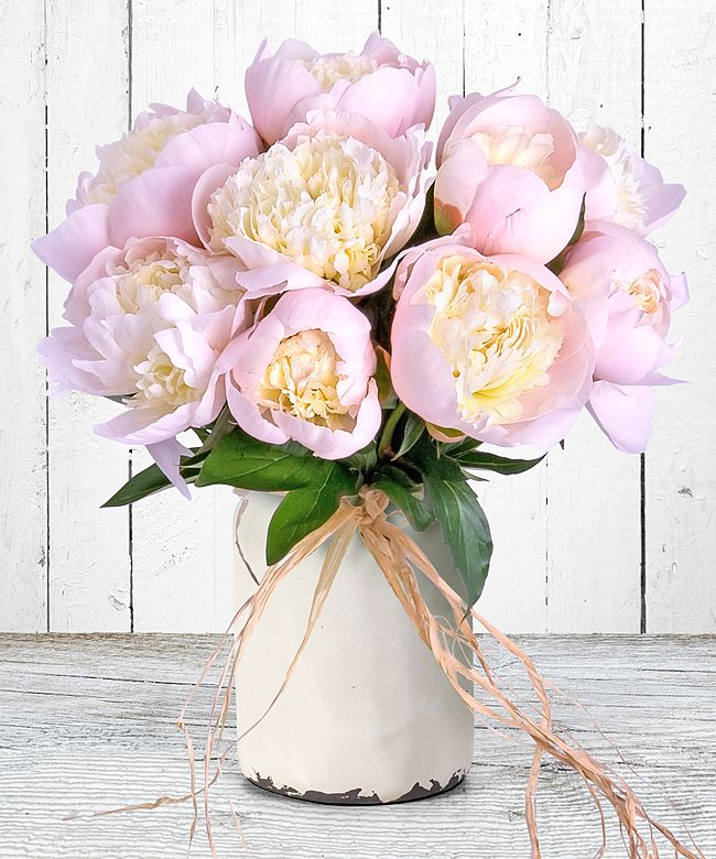 10 Pfingstrosen Rosa Jetzt Bestellen Bei Valentins Valentins