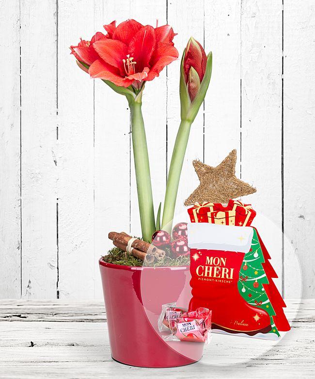 Rote Amaryllis Im Topf Und Mon Cheri Stiefel Jetzt Bestellen Bei