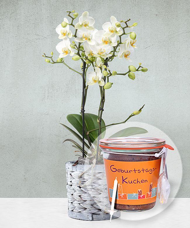 Weisse Orchidee Im Grauen Korbtopf Und Kuchen Im Glas Geburtstag