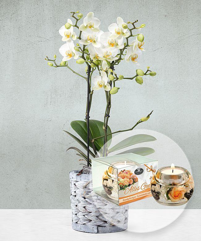 wei e orchidee im grauen korbtopf und dreamlight alles gute jetzt bestellen bei valentins. Black Bedroom Furniture Sets. Home Design Ideas