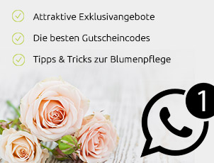 Valentins What's App Newsletter Image